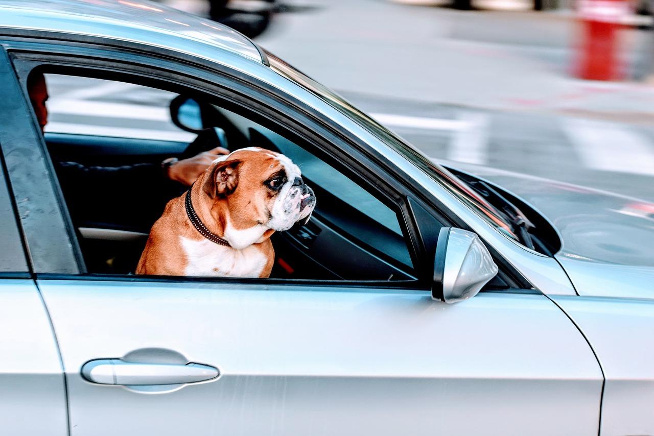 ablak_kutya autoban