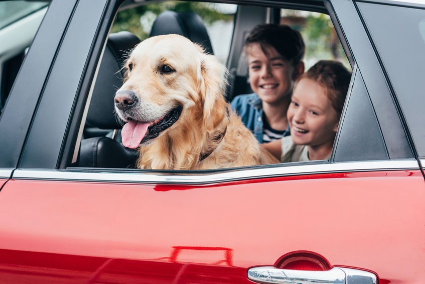 kutya az autoban gyerekekkel