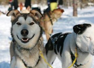 kutyaszan transzfer