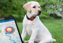 GPS nyomkövető nyakörv kutya