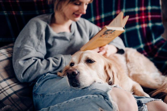 karantén háziállat kutya felelős állattartás