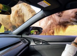 szadai szafari park autóval