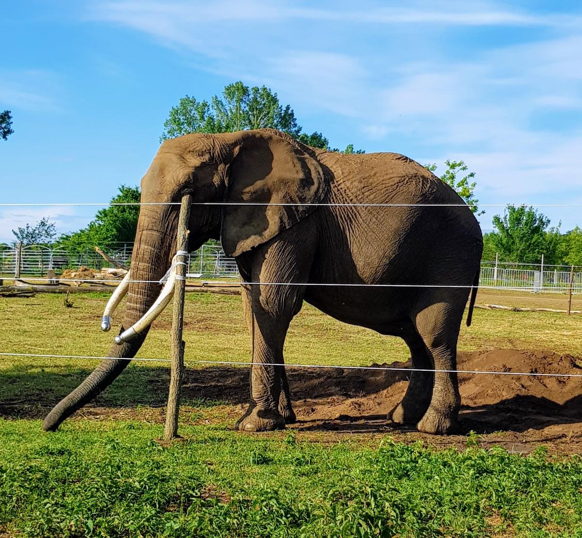 autós safaripark szadán elefánt