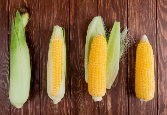 csöves kukorica
