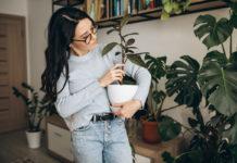 szárazságtűrő növények szobanövények