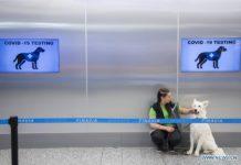 kutyák koronavírus