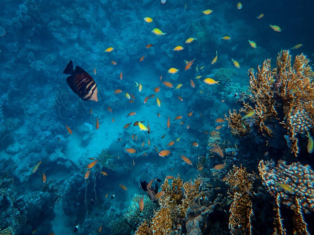 búvárkodás tengeri élet halak
