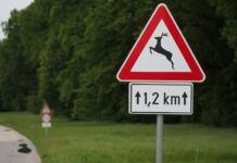 vadveszély jelzőtábla vadgázolás