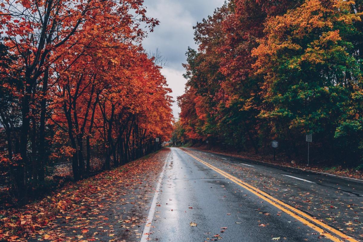 őszi autózás lehullott falevelek ködös esős idő